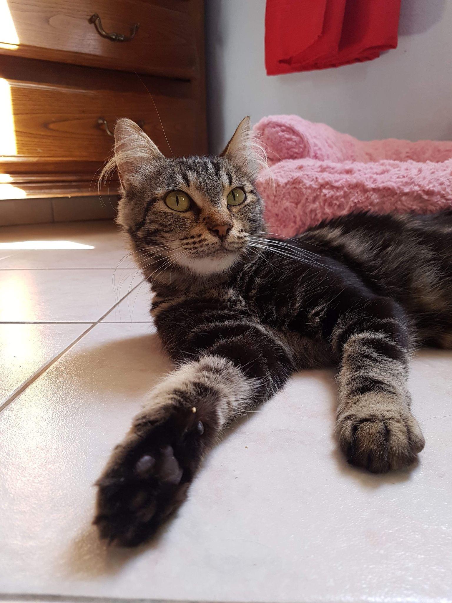 duchesse chatte de 2 ans à adopter en région PACA par association rien que pour eux