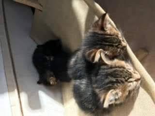 témoignage famille d'accueil chats en région niçoise